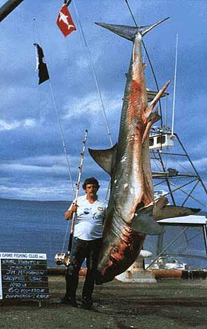 Größter Weißer Hai Gefangen